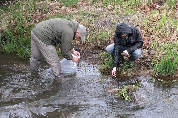 Rozpoczęto kolejny cykl zarybień pstrągiem potokowym