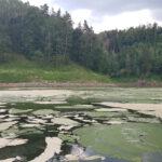 Odłowy kontrolne na Jeziorze Pilchowickim